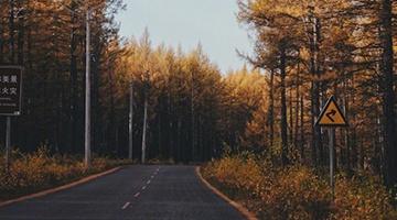 呼伦贝尔的秋色