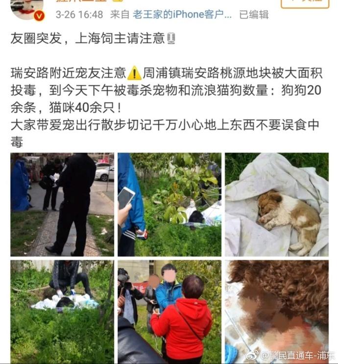上海一小区17只猫狗呕吐后死亡 警方已介入调查