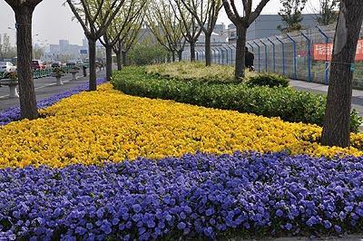 沪提升进博会期间市容绿化 人民广场将现大型立体花坛