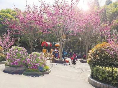 杨浦两座公园进行花卉改造 明年春天将颜值大涨