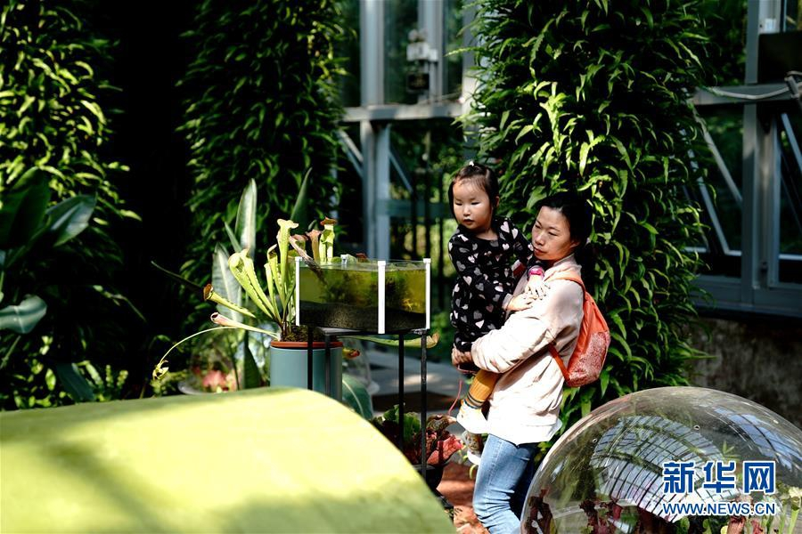 上海食虫植物展受青睐