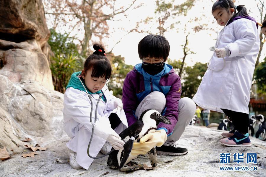 上海动物园的超萌小兽医