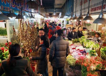 沪市中心有四个较大花鸟市场 价廉物美环境好
