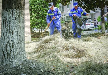 市民在小区绿化带养高头大马 经协调已被运离小区
