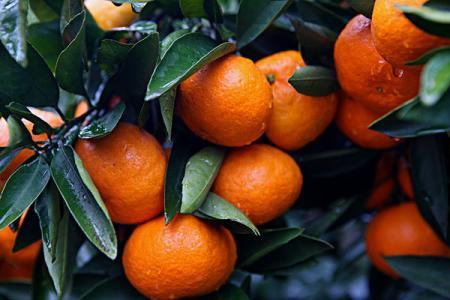 申城已有11家公园销售本地水果 售价比摊位便宜