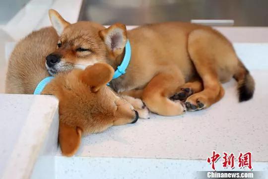 中国宠物经济走向爆发 过去管儿叫狗子现在管狗叫儿子