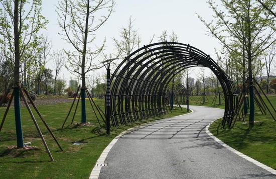 奉贤金汇镇修建一条42公里长林荫小道 串起18个村美景