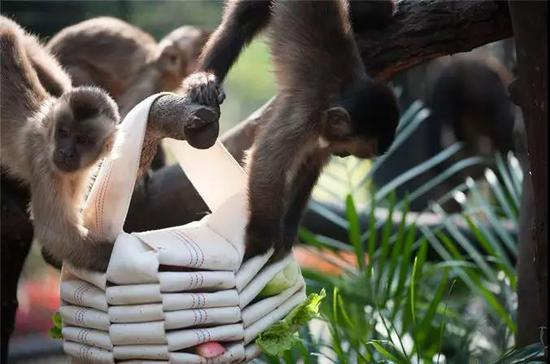 踏青季上海动物园游客数量激增