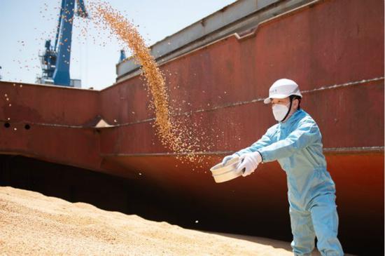 6.3万吨巴西大豆抵沪 海关关员高温下攀登豆山精准查验