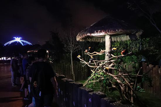 大嘴鸟长廊。本文图片均由上海野生动物园提供