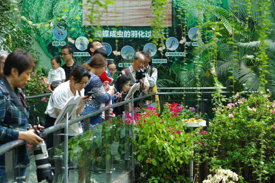 上海动物园蝴蝶展8万只蝴蝶翩飞