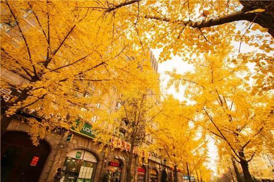 ▲金秋十月,黄金城道将迎来一年中最美的季节