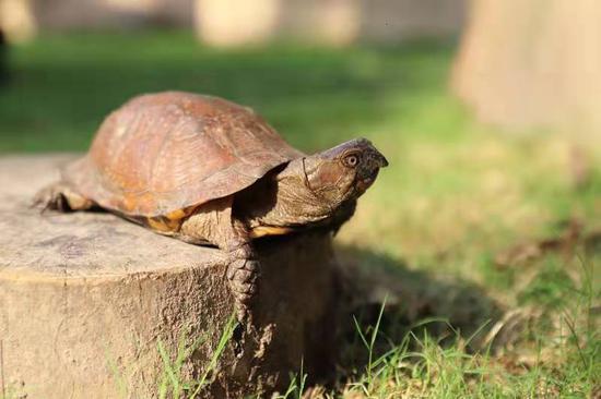 41只濒危活体乌龟从墨西哥偷渡来沪 刚下飞机就被查获