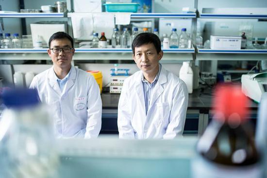 华东师大研发超高活性基因编辑器 或助地中海贫血治疗