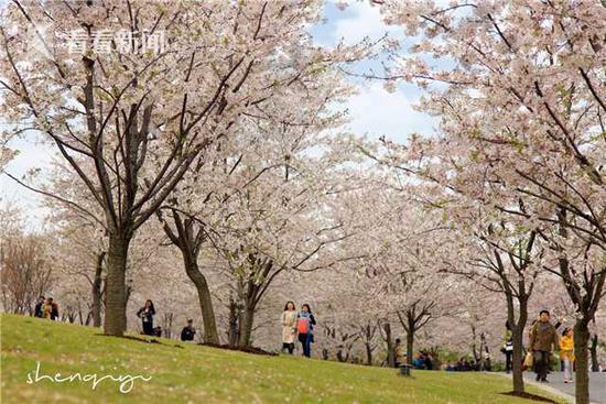辰山植物园现不文明行为:市民摘洋槐花 现场一片狼藉