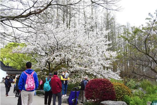 上海本周基本都是好天气 各公园迎来最美赏花季