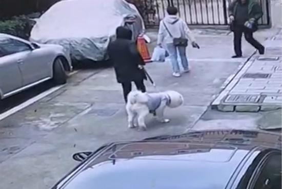 两犬相斗致人受伤狗主判赔近19万 遛狗不拴绳后果严重