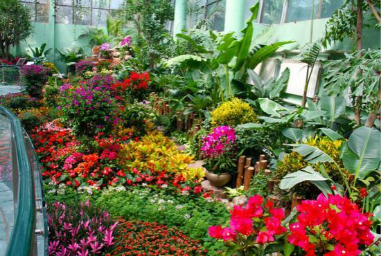 上海动物园第8届蝴蝶展开幕 蝴蝶花园重装亮相宛如仙境