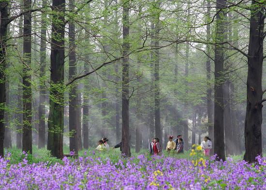 图说:东平森林公园