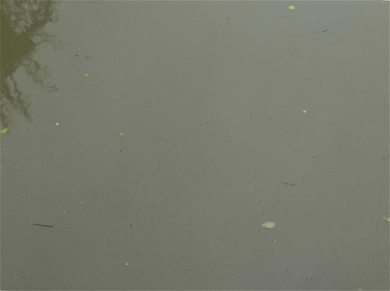 虹康新苑小区南部的陆家浜,雨后河水十分浑浊。