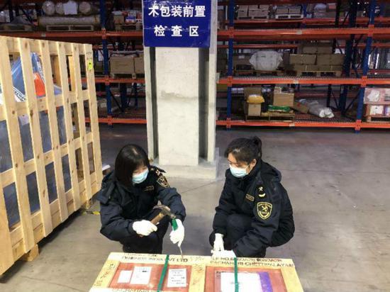 上海海关创新监管模式 截获检疫性有害生物异胫长小蠹