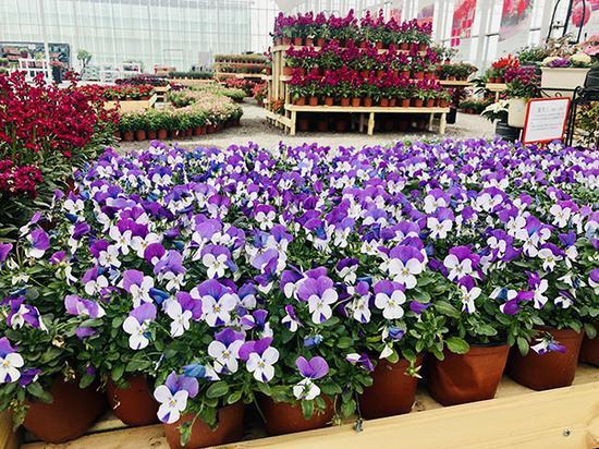 上海崇明智慧生态花卉园展示温室。
