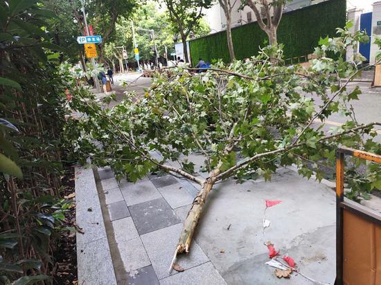 图说:掉落的树枝陈抗美 摄