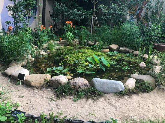 生境花园中的池塘生态系统。本文图片均为澎湃新闻见习记者 曹伊湄 图