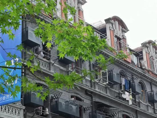 图说:红花槭替代悬铃木成为了行道树 黄浦区绿化和市容管理局供图(下同)
