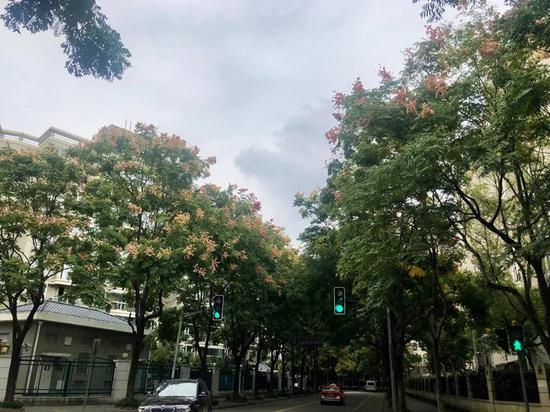 秋意渐浓 沪上这14条林荫道上的栾树美不胜收