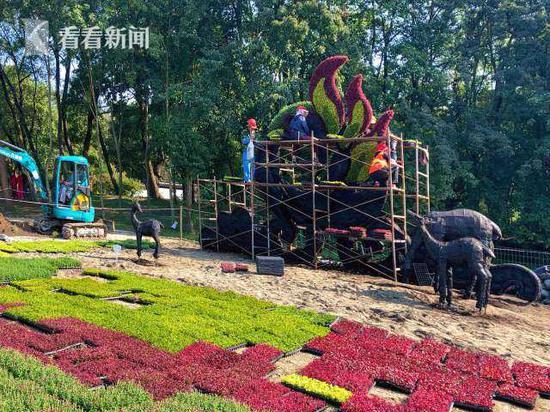 2020上海菊花展加紧布展 将于10月26日正式开幕