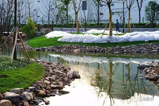 安北部新添大型雨水花园 东茭泾绿地开放图片