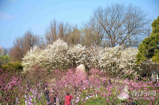 图片来源:上海共青森林公园
