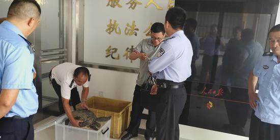 海龟将送至野生动物保护基地进行安置。