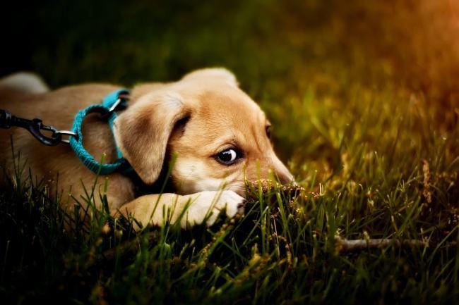 警方开发APP规范养犬行为 可办理注册、注射疫苗等手续