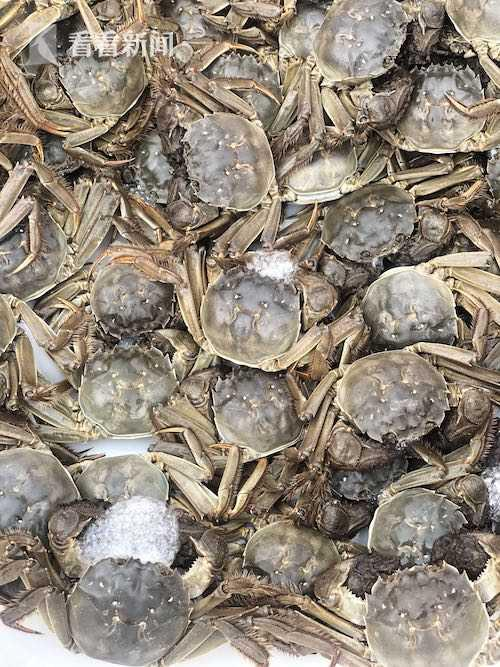 本地黄浦江大闸蟹正式开捕 六七两大蟹超过八成