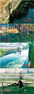 ◆从七间村桥往东,记者沿河看到几处排污口正流出大量污水。  均 车佳楠 摄
