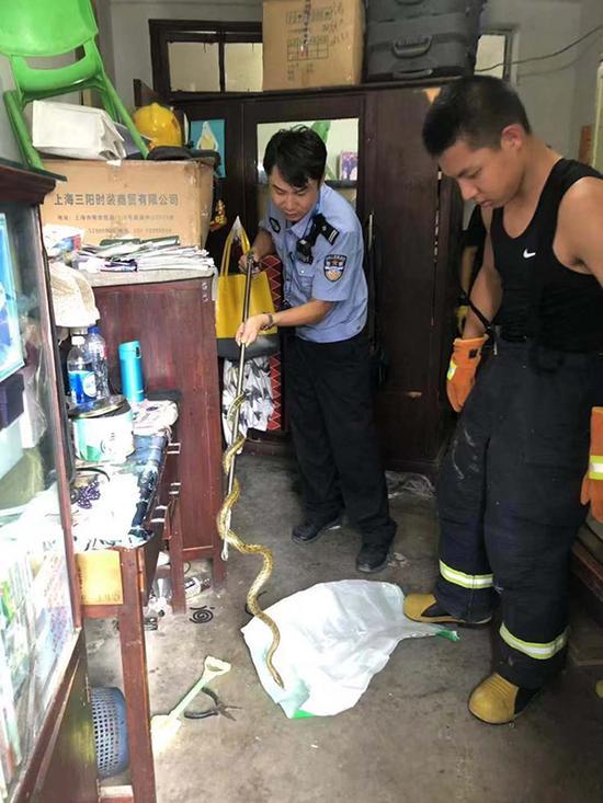 民警捕获两米长菜花蛇。