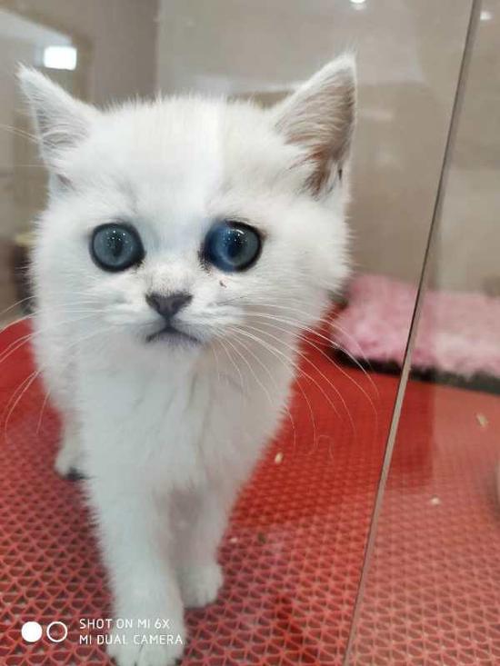 被薛某偷走的名贵小猫