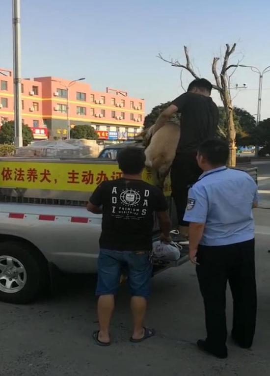 两只伤人犬已被警方吊销狗证并进行收容。 宝山警方 图