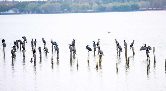 西沙明珠湖自然景观和人文景观风采宜人。