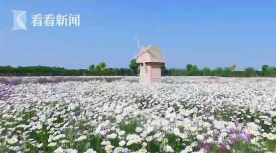 崇明借力花博会发展花卉产业链 推动世界级生态岛发展