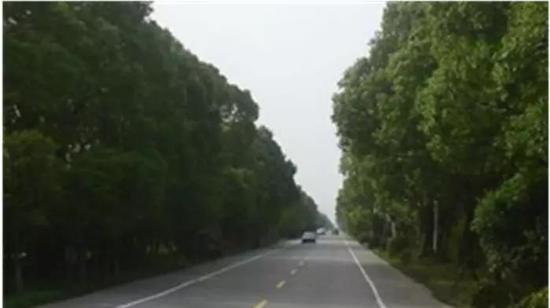 望园路中央公园段森林大道将开工 效果图一览