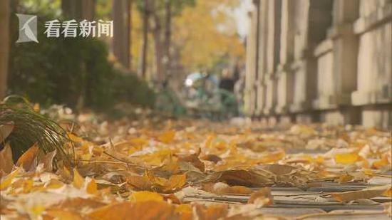 秋意染申城 41条景观道开启落叶不扫模式
