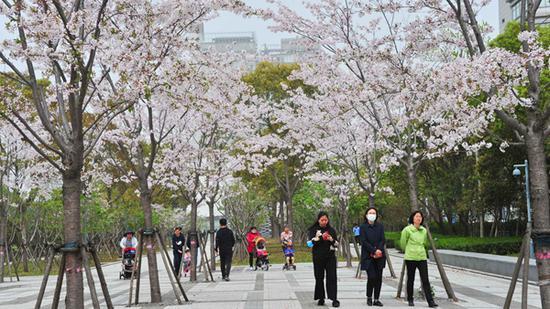 上海今阴有阵雨最高20℃ 清明假期将有弱冷空气来袭
