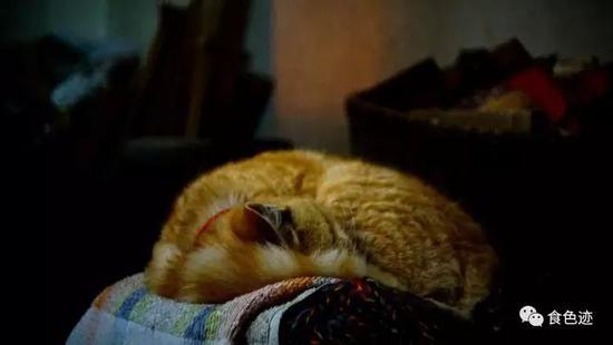 肥猫是要偎灶的
