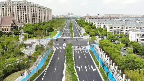 临港首条景观提升示范道路开通 绿色生态充分融入景观