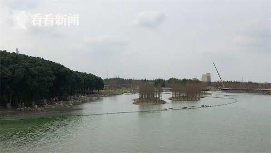 青浦水环境治理显成效 元荡生态岸线示范段贯通