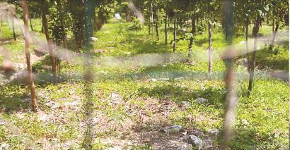 鸿宝15组35亩土地被改建成公益林,但依然乱石林立。 栗思 摄