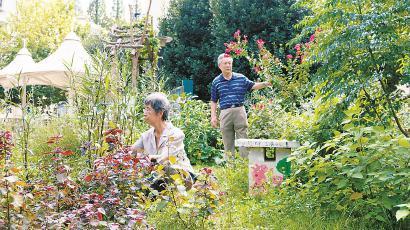 鞍山四村第三居民小区居民在百草园里忙碌。 黄尖尖 摄